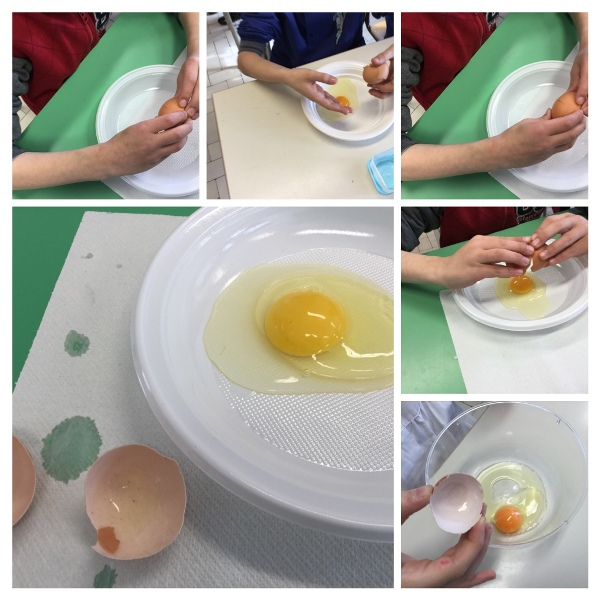 La cellula uovo...