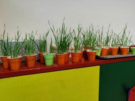 Dal seme alla pianta - foto n. 3 Infanzia Capriglia
